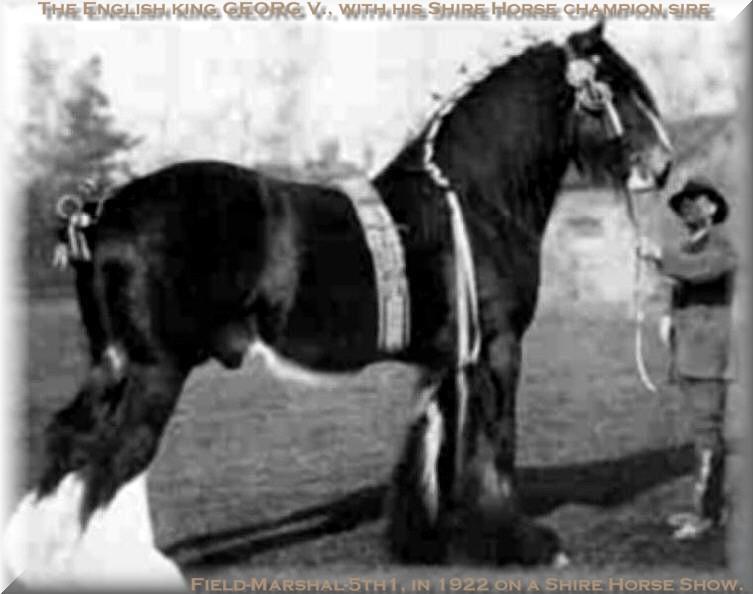 Shire Horse sire Field-Marshal 5th1 und sein stolzer Eigentümer König George V. von Windsor